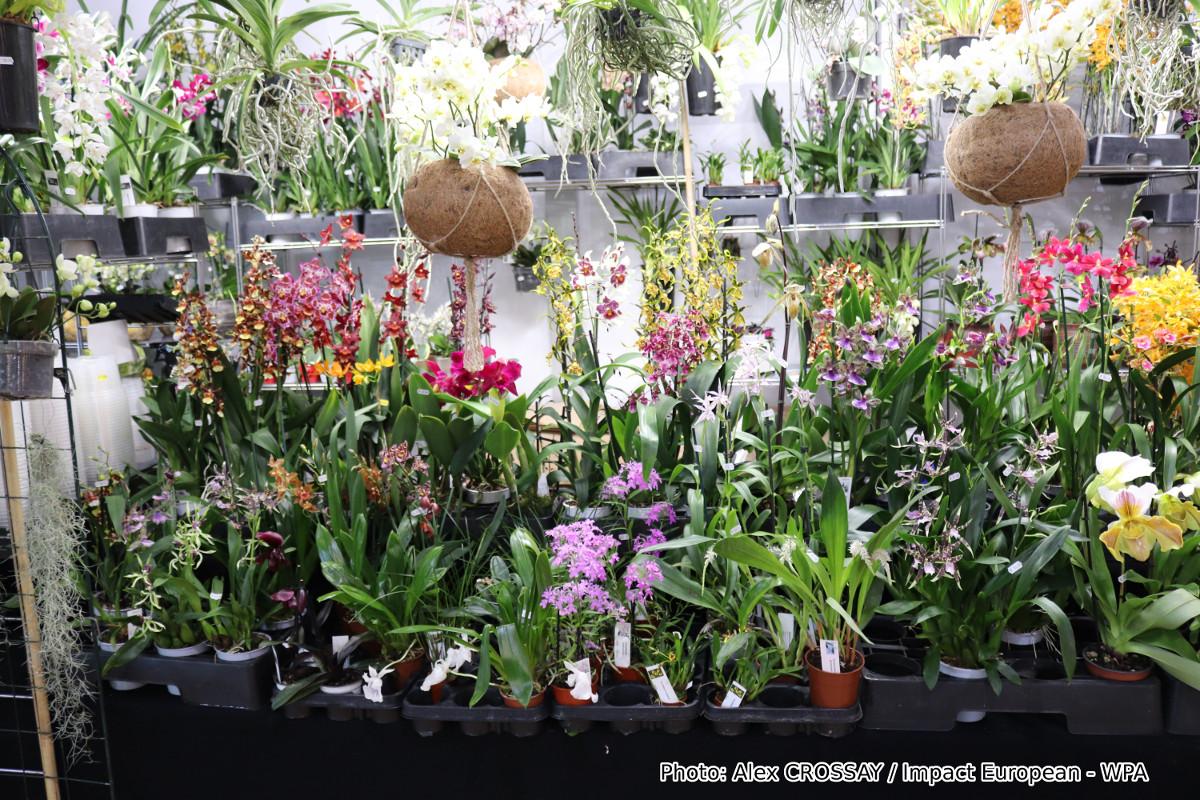 Mille et une orchidées 2018 au Jardin des Plantes